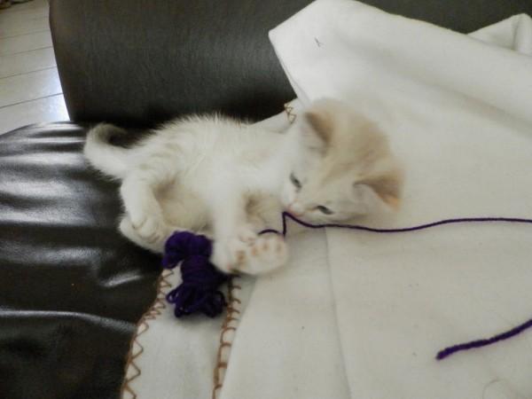 Older Cat Not Eating After New Kitten