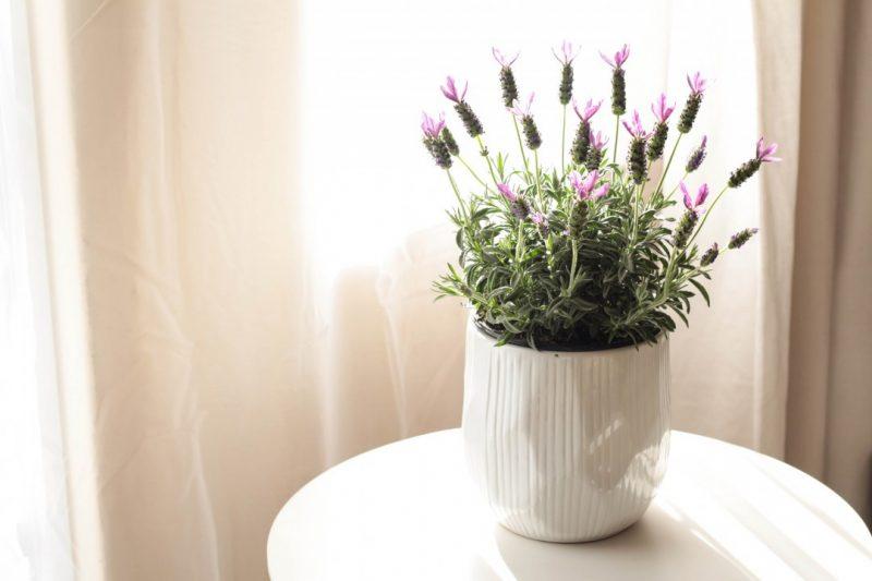 netflorist lavender