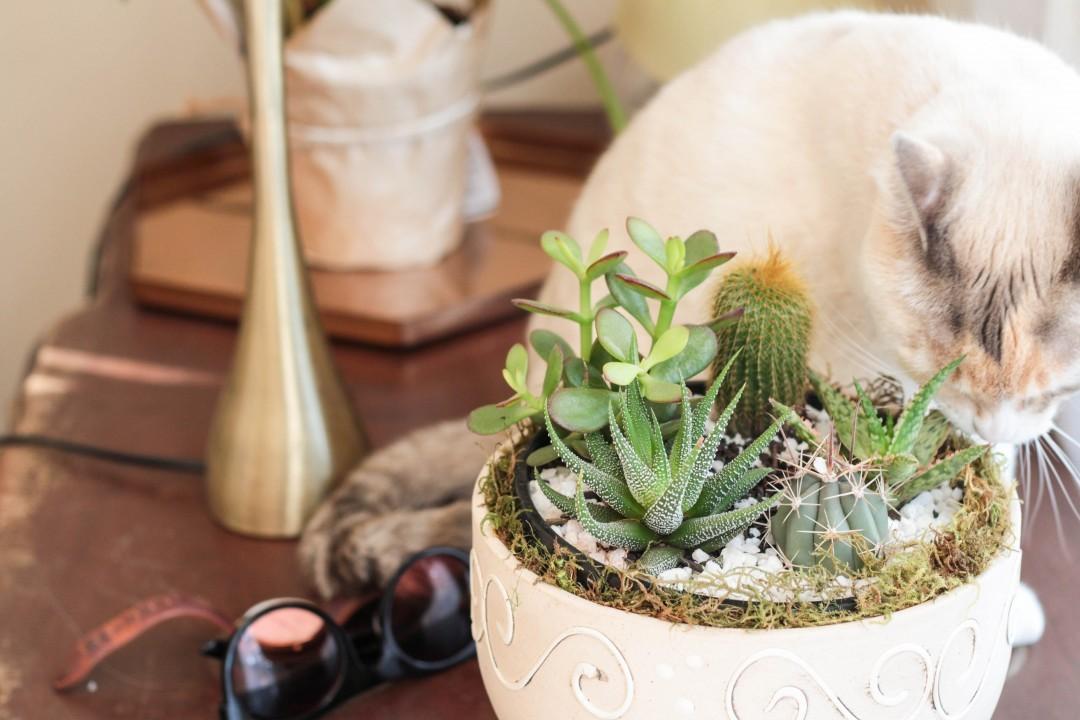 How to keep house plants alive