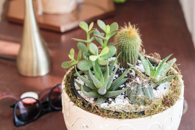 netflorist succulents